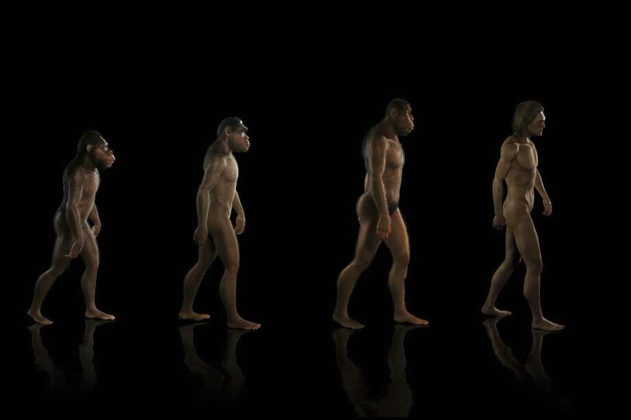 Until about 3 million years ago, experts thought, there weren't a lot of hominid species. In fact, some researchers argued that most hominid fossils represented just a single species. Photo: Science Picture Co /Getty Images /Collection Mix: Subjects RM / Collection Mix: Subjects RM