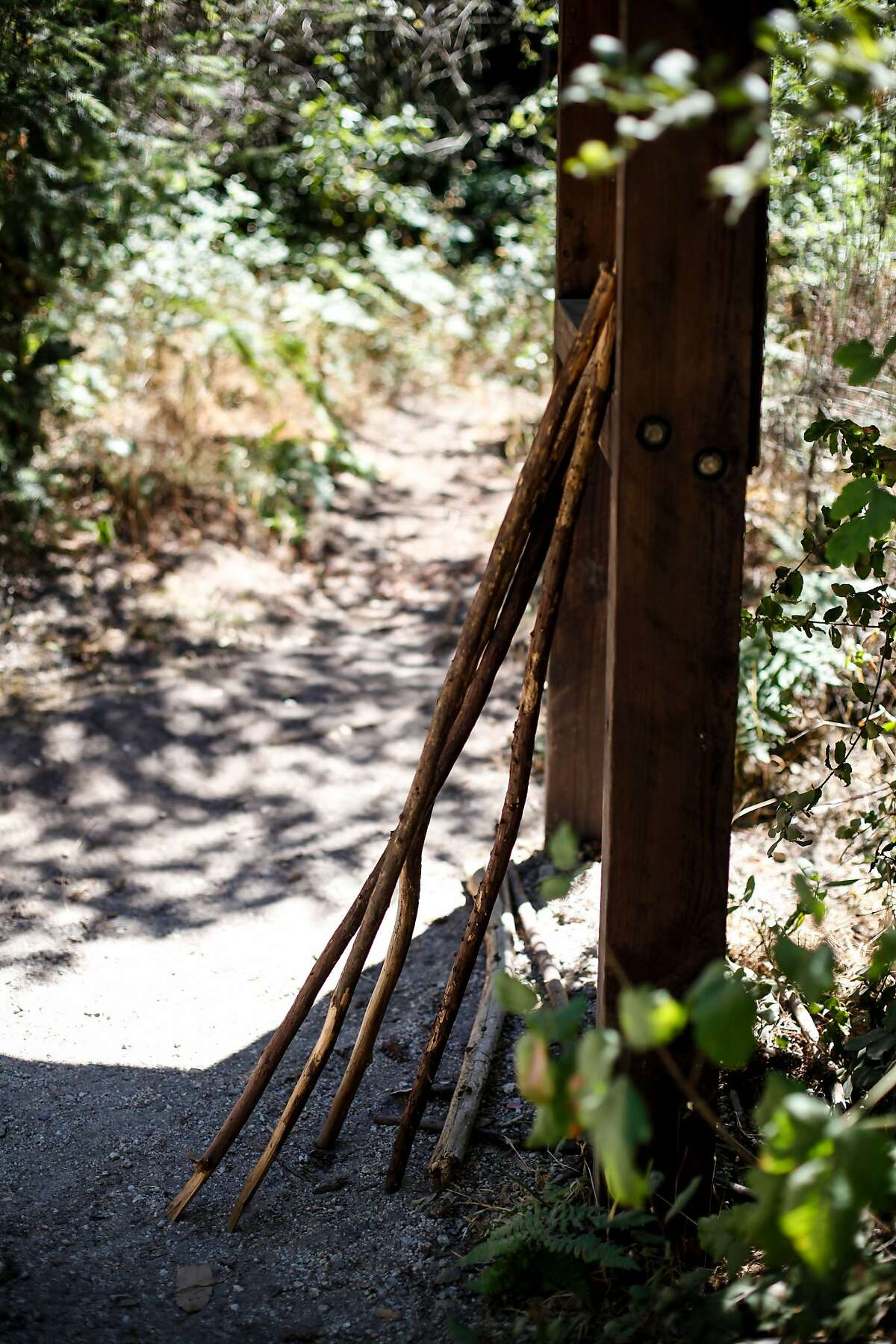 Walking sticks at Henry Cowell Redwood State Park in Felton, Calif., on Friday, July 3, 2015.