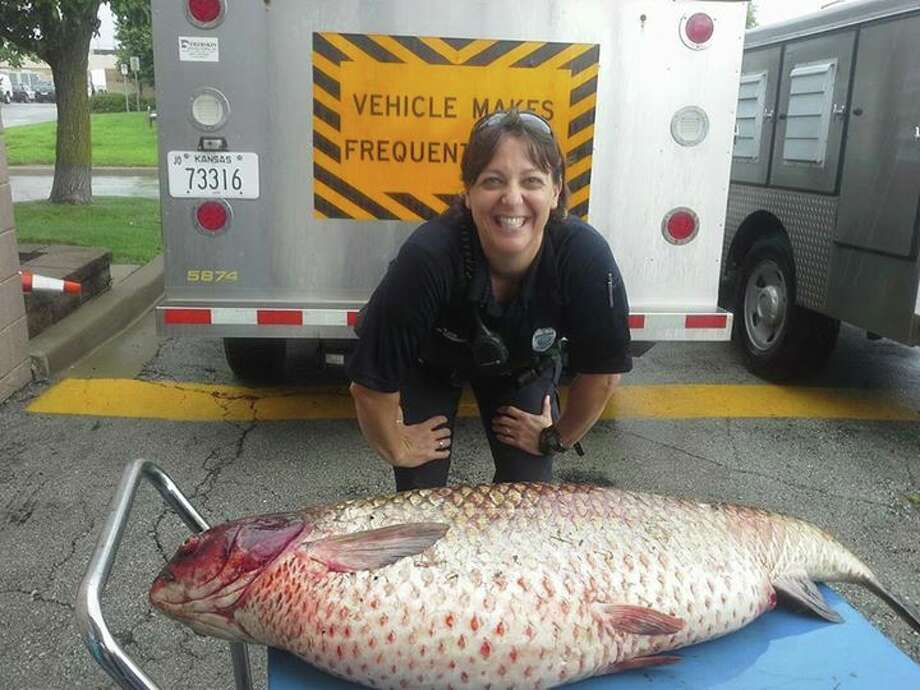 The Olathe, Kansas Police Department posted this photo of animal control officer Jamie Schmidt and a 3.5-foot-long, 60-pound carp after she removed the fish from a roadside ditch. The large fish was likely caught in the floodwaters of a nearby lake, Schmidt told The Kansas City Star. Photo: Facebook Screenshots