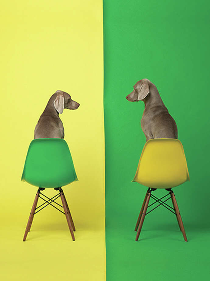 "William Wegman's ""Yellow Two Green"" is amPhotoshop 3.0"