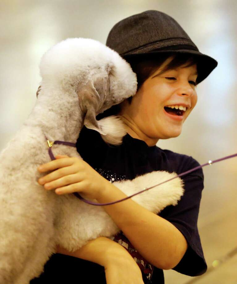Gareth Brown, 10, of Hammond, LA plays with a Bedlington Terrier named Bullet during the Houston World Series of Dog Shows at NRG Center Sunday, July 20, 2014, in Houston. ( Melissa Phillip / Houston Chronicle ) Photo: Melissa Phillip, Staff / © 2014  Houston Chronicle