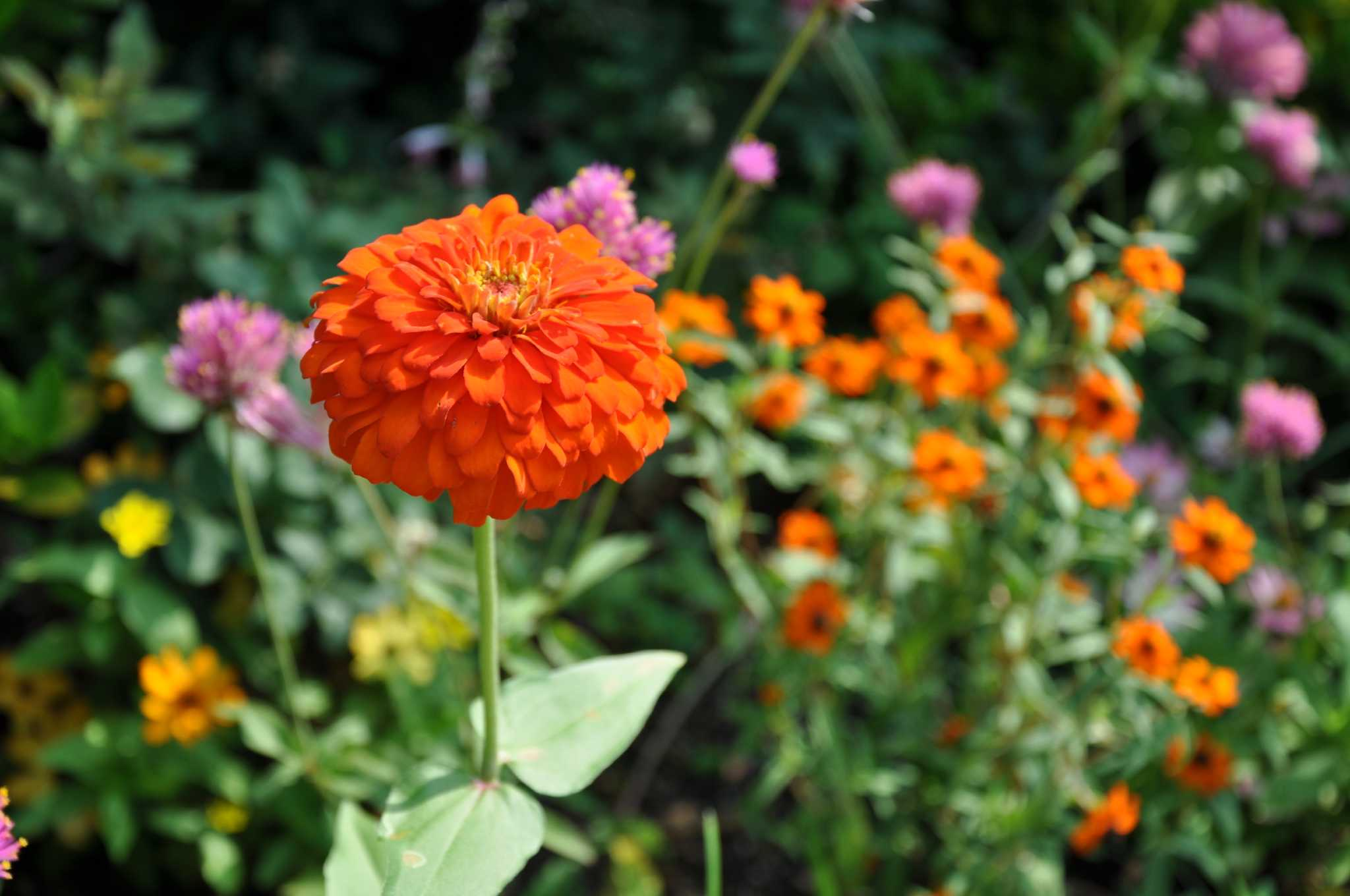 These Plants Can Take The Heat Houston Chronicle