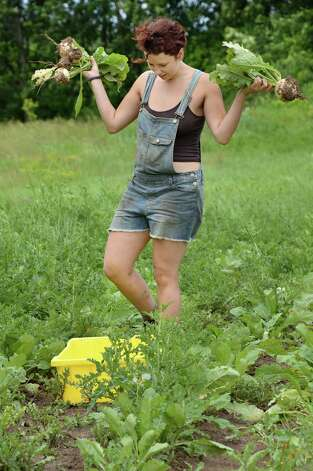 Farm worker Layla Lakos harvests turnips at 9 Miles East Farm Wednesday July 8, 2015 in Schuylerville, NY.  (John Carl D'Annibale / Times Union) Photo: John Carl D'Annibale / 00032515A