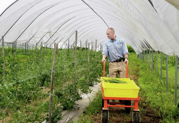 Gordon Sacks harvests vegetables at 9 Miles East Farm Wednesday July 8, 2015 in Schuylerville, NY.  (John Carl D'Annibale / Times Union) Photo: John Carl D'Annibale / 00032515A