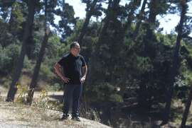 Nathan Winograd, of the Save the East Bay Hills community group, looks out above a canyon filled with eucalyptus and Monterey pine trees at Redwood Regional Park in Oakland, Calif. on Wednesday, July 15, 2015. A controversial plan to remove thousands of trees in the East Bay hills as part of a federally-funded fire mitigation program is being opposed by Winograd's group and several others.