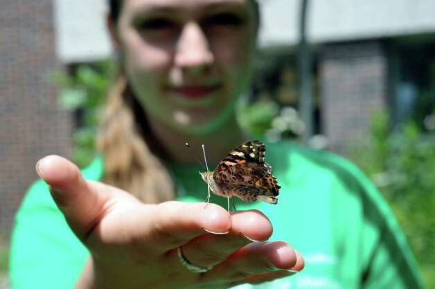 Abby Ryan, who will start her junior year in high school, displays a painted lady butterfly on her finger inside the butterfly house at the Farnsworth Middle School Butterfly Station on Wednesday, July 15, 2015, in Guilderland, N.Y.  This is the 17th year of the student-run butterfly house and native plant garden.  The Butterfly Station is free and open to the public, open from 10 a.m. to 1:30 p.m., Monday through Friday, now through August 6th.  Ryan has been taking part in the summer program since she was a seventh grader at Farnsworth Middle School.  Many of the students who take part in the program return each summer even when they are in high school.   (Paul Buckowski / Times Union) Photo: PAUL BUCKOWSKI / 00032640A