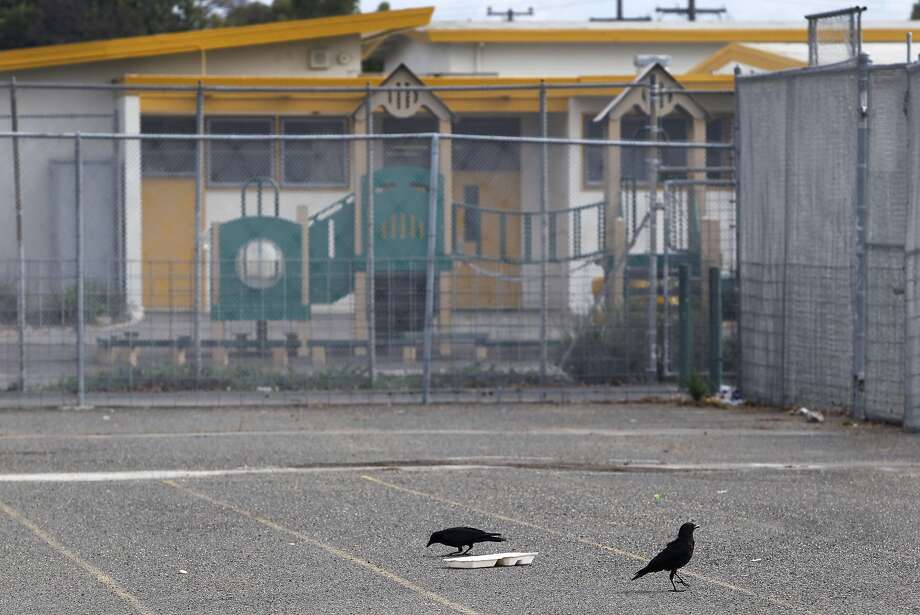 Crows forage for food on a school yard at Madison Park Business and Art Academy in Oakland, Calif. on Thursday, July 16, 2015. Construction is scheduled to start soon on a high school located on what is now a sprawling asphalt playground between the elementary (background) and middle school already on the campus. Photo: Paul Chinn, The Chronicle