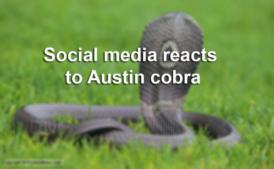 Social media reactions to the Austin Monocled Cobra. Photo: Photolibrary.com, Courtesy / Copyright 2010 photolibrary.com