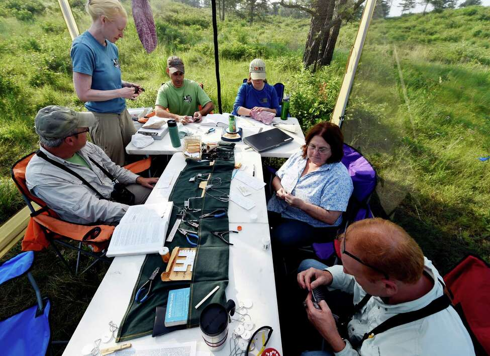 Neil Gifford, conservation director at the Albany Pine Bush Preserve, lower right, and his team of biologists and conservationists conduct measurements and health checks on a captured bird Monday morning, July 13, 2015, at the Pine Bush Preserve in Albany, N.Y. (Skip Dickstein/Times Union)