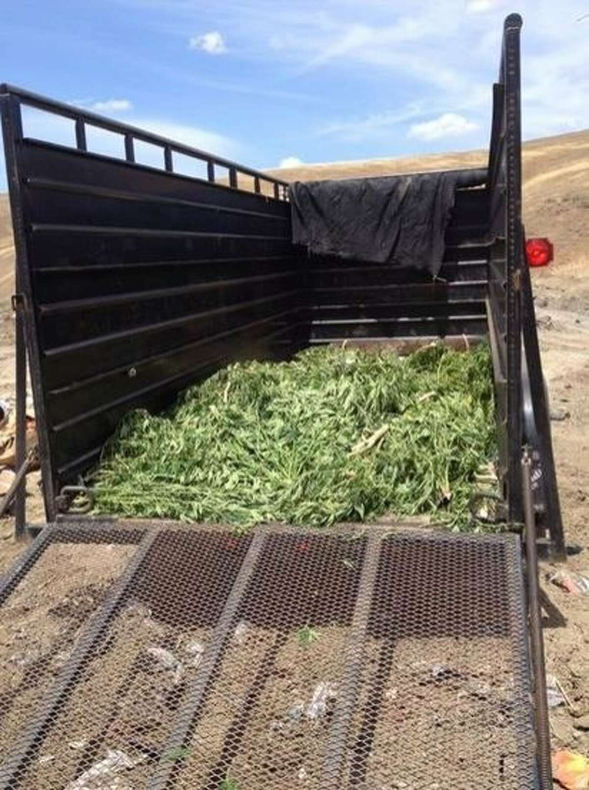 Deputies from the sheriff's office clear a marijuana garden found growing in unincorporated Santa Clara County on Friday, July 17, 2015.