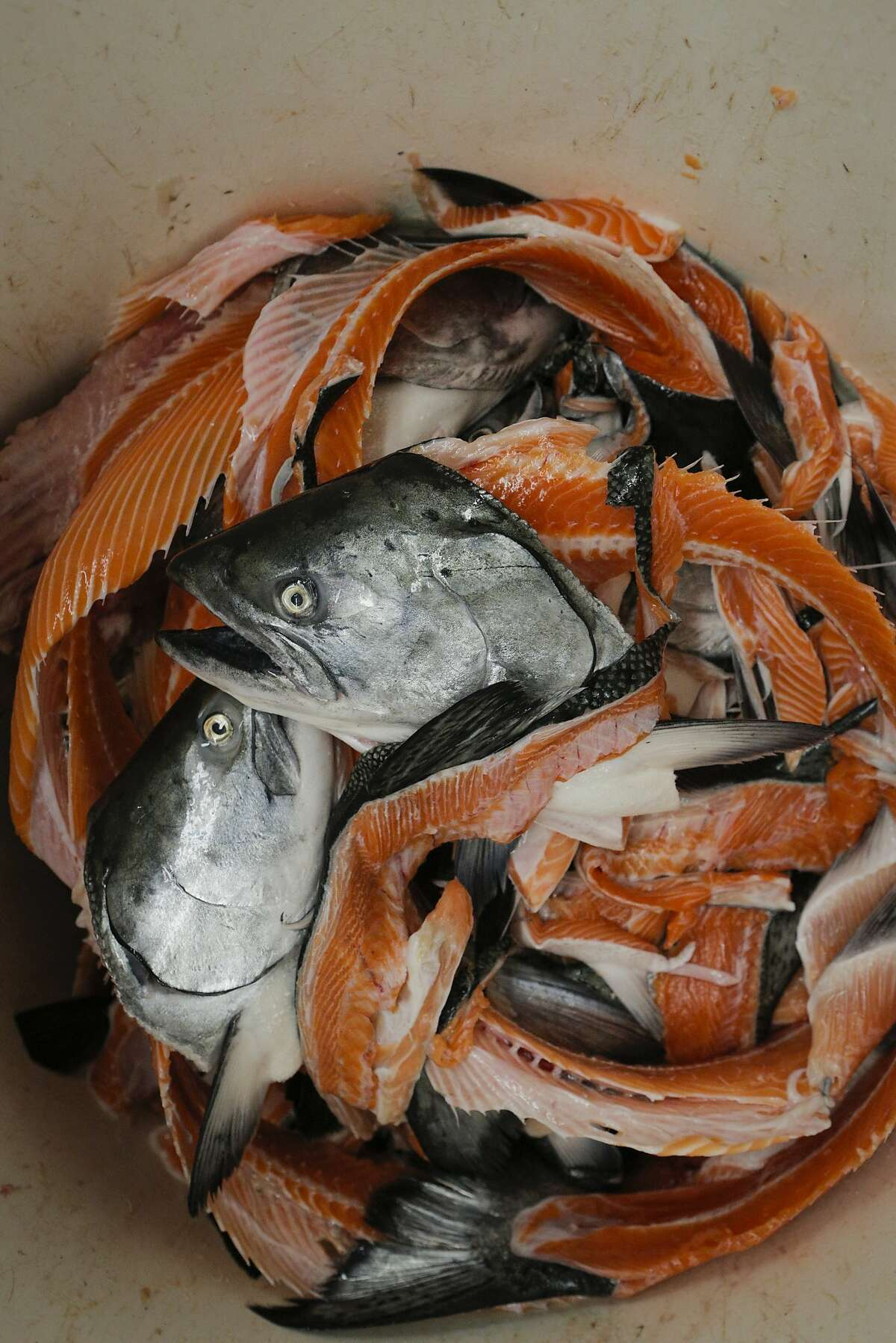 """Wild king salmon carcasses are seen at the North Coast Fisheries processing plant in Santa Rosa, California, on Friday, July 17, 2015. Siren Fish Company, owned by Anna Larsen, has its fish processed at North Coast Fisheries. Siren Fish Company specializes in providing locally caught, sustainable fish to its """"CSF"""" members on a weekly basis."""