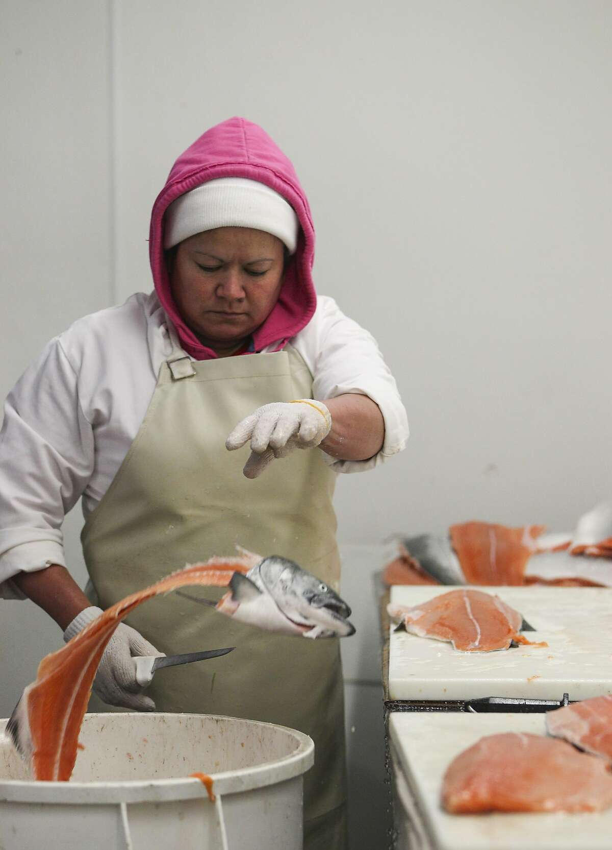 """Maria Victoria Flores de Garcia fillets wild king salmon at the North Coast Fisheries processing plant in Santa Rosa, California, on Friday, July 17, 2015. Siren Fish Company, owned by Anna Larsen, has its fish processed at North Coast Fisheries. Siren Fish Company specializes in providing locally caught, sustainable fish to its """"CSF"""" members on a weekly basis."""