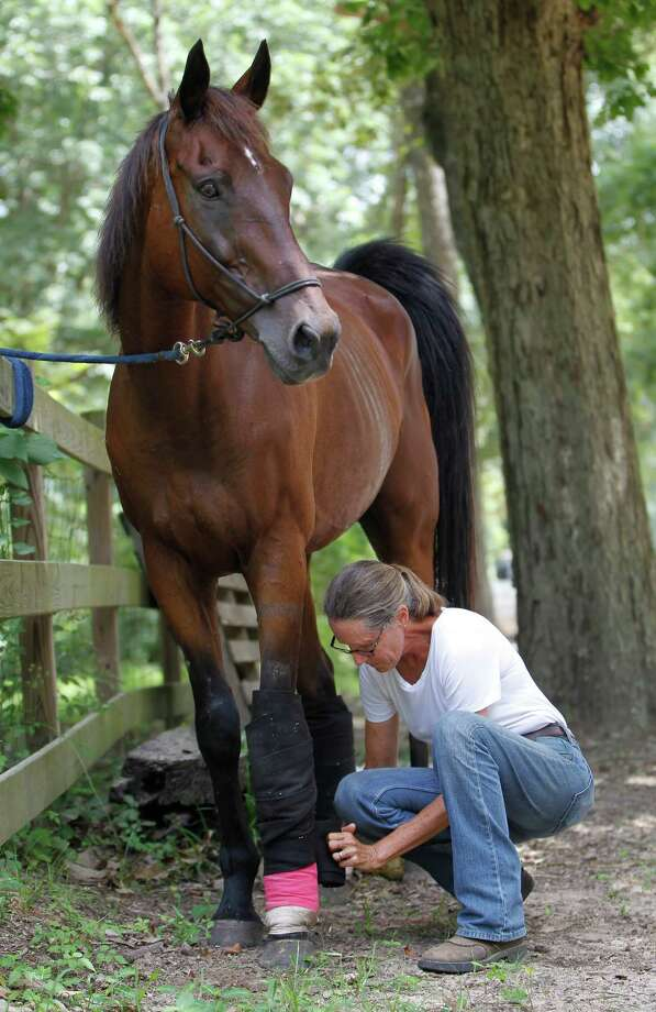 Donna Stedman, who runs Henry's Home sanctuary, bandages Chandler, a retired race horse. Photo: Karen Warren, Staff / © 2015 Houston Chronicle