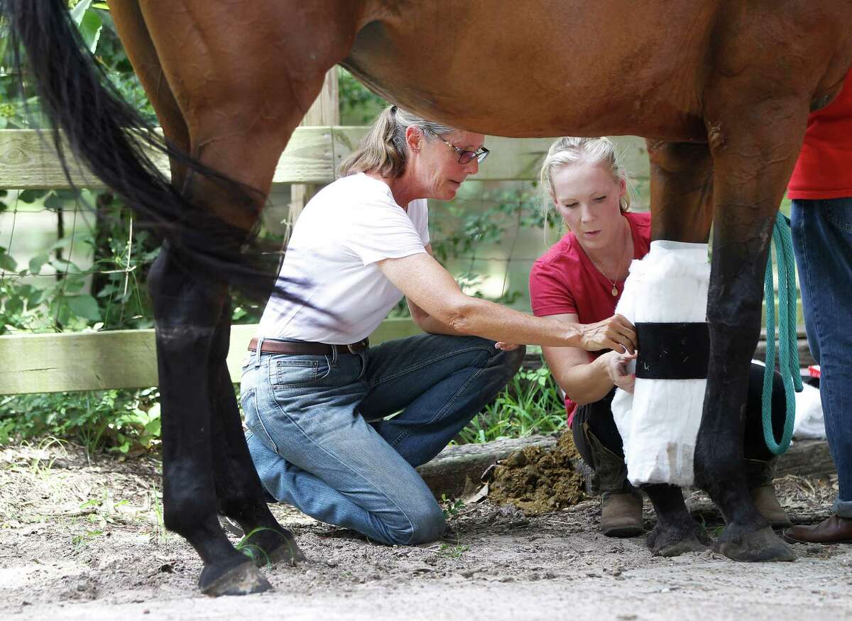 Donna Stedman works with Shannon Novak to fix a bandage on Chandler at Henry's Home, a sanctuary for horses and people in Spring. Novak, a volunteer, is married to a veteran who has gained strength and a sense of calm from being around Stedman's horses. ( Karen Warren / Houston Chronicle )