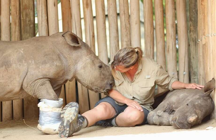 Jannette Boodon-Elliott cares for orphaned baby rhinos Venus, which has a cast on its foot, and Manji at the Care for Wild Africa Rehabilitation in South Africa. Photo: Courtesy Photo