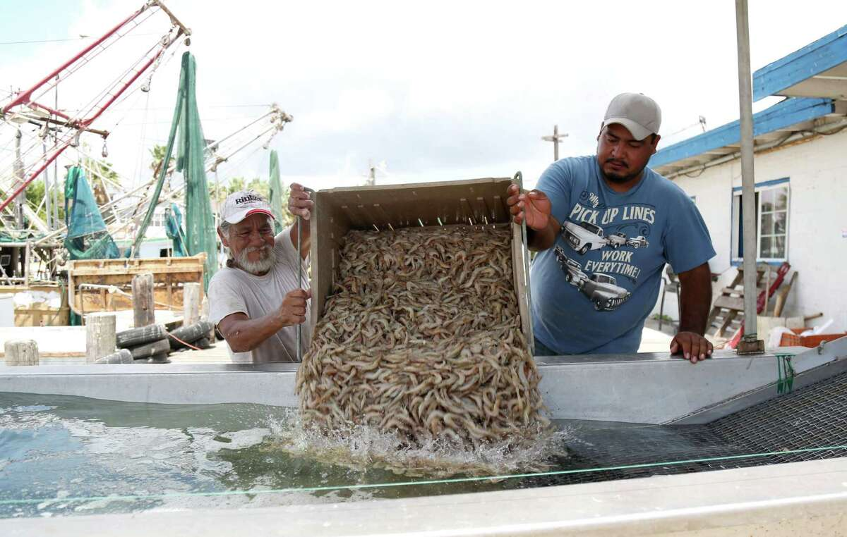 """Frank Gonzales, left, a fishermen for 27 years, and Luis Santos sort and weigh shrimp in San Leon. """"It's never been this low,"""" Gonzales said. """"It's a bad year."""" Other shrimpers say it's too soon to tell how the season will go."""