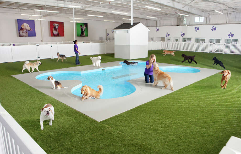 This undated artist rendering depicts Paradise 4 Paws, a holding area for dogs in a new luxury terminal at New York's John F. Kennedy International Airport.  The privately owned terminal is designed to handle the over 70,000 animals a year. Photo: HONS / Classic Communications courtesy