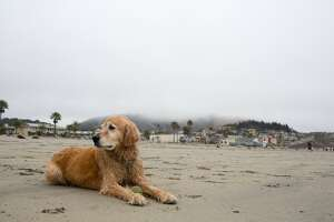 Which San Luis Obispo beach town suits your personality? - Photo