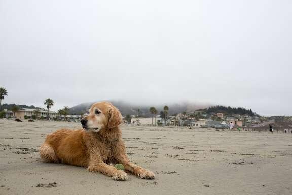 This is Avila Beach in Avila Beach Calif., Thursday July 16, 20015. (photo by Randi Lynn Beach)