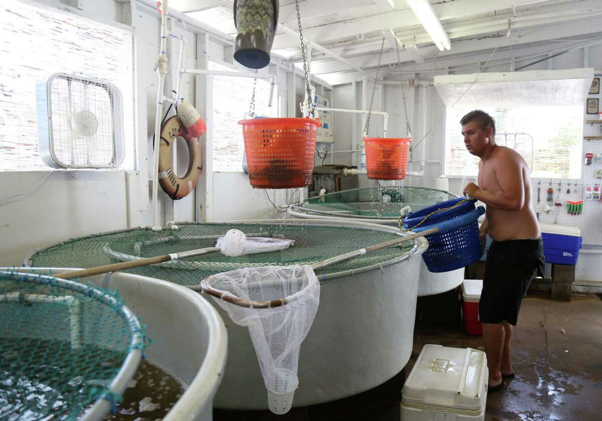 Ryan Morris, a summertime fisherman of four years, carries a load of live bait to a storage container at Hillman's Seafood Friday, July 17, 2015, in Dickinson. Morris is a college student who fishes in the summer for money.