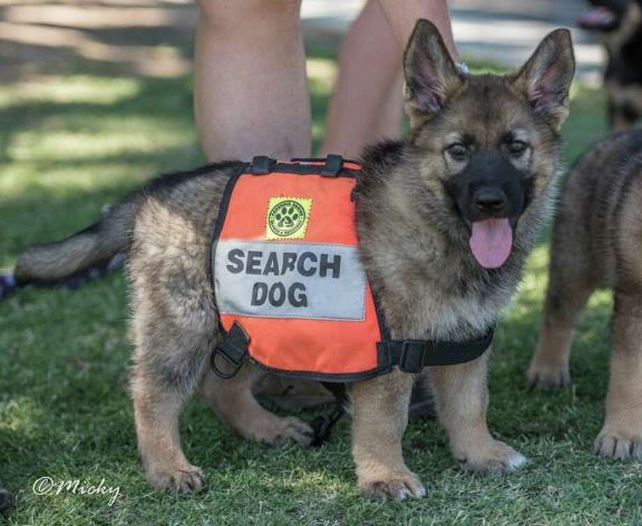 San Antonio search and rescue animal training facility ...