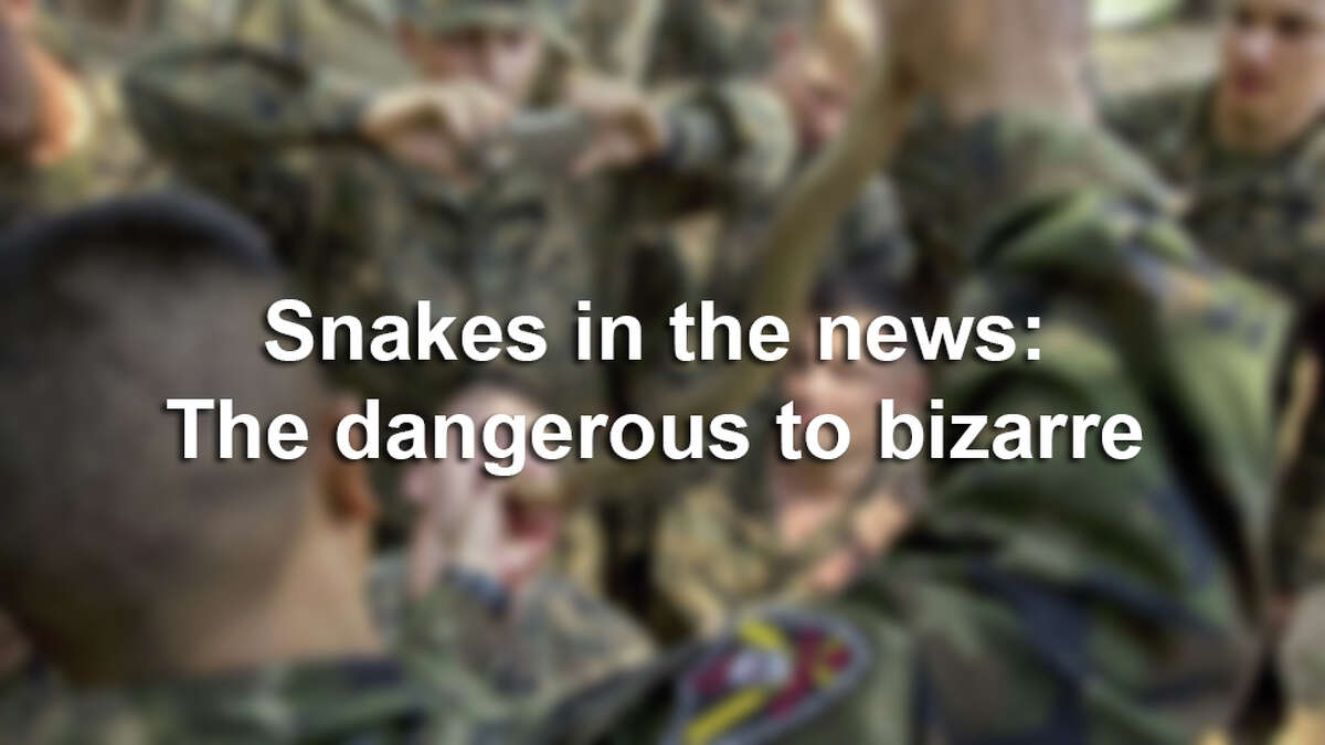 Snake sightings are no surprise to Texans, but some can be viscous, ginormous and downright terrifying. Keep clicking to see snakes that have made national headlines.
