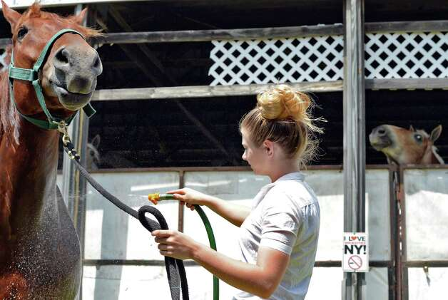 Alexis Rafus, 15, of Cambridge sprays down Leroy, an 8-year-old Suffolk Punch as the Saratoga County Fair begins Tuesday July 21, 2015 in Ballston Spa, NY.  (John Carl D'Annibale / Times Union) Photo: John Carl D'Annibale / 00032674A