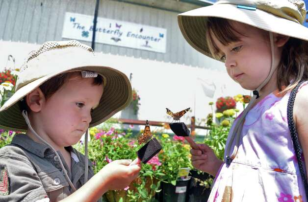 Elgin, 4, and Margot Gordon, 4, of Brunswick with Monarch butterflies at the Butterfly Encounter exhibit as the Saratoga County Fair begins Tuesday July 21, 2015 in Ballston Spa, NY.  (John Carl D'Annibale / Times Union) Photo: John Carl D'Annibale / 00032674A
