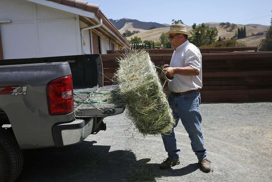 Donnie Vaca unloads a hay bale of alfalfa and grass as a sample for a customer July 20, 2015 in Pleasanton, Calif. Vaca, who has had his business for 20 years selling hay and grain in the area, says his business would most definitely be effected if water was restricted in West Side Irrigation District. Photo: Leah Millis, The Chronicle