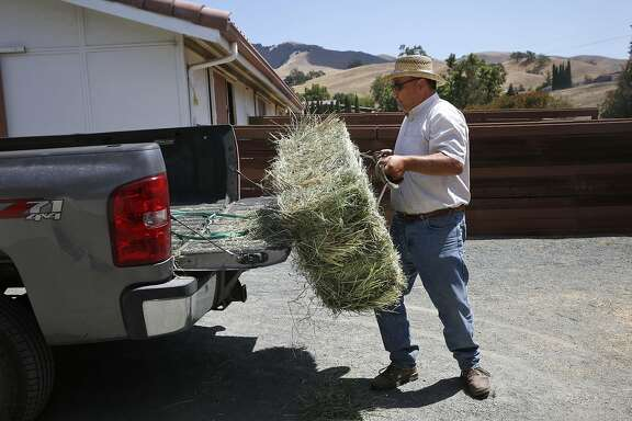 Donnie Vaca unloads a hay bale of alfalfa and grass as a sample for a customer July 20, 2015 in Pleasanton, Calif. Vaca, who has had his business for 20 years selling hay and grain in the area, says his business would most definitely be effected if water was restricted in West Side Irrigation District.