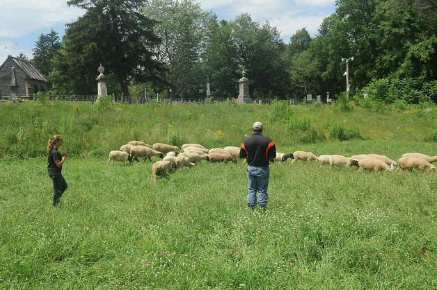 Katelyn Barber, instruction support assistant with livestock at SUNY Cobleskill, and Dirk Schubert, livestock manager at SUNY Cobleskill are seen with sheep and goats from Cobleskill College that are replacing mowing the grass at Historic Vale Cemetery on Tuesday, July 21, 2015 in Schenectady, N.Y. The Natural Burial Area at Vale Cemetery is where ruminant animals are used. This area is free of herbicides and insecticides.  (Lori Van Buren / Times Union) Photo: Lori Van Buren / 00032688A