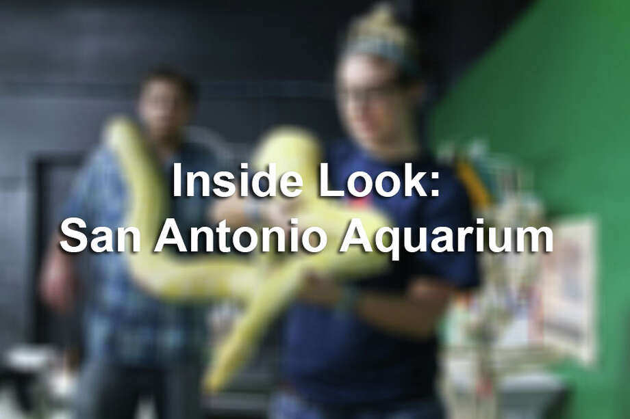Take a look inside the San Antonio Aquarium with this collection of photos.