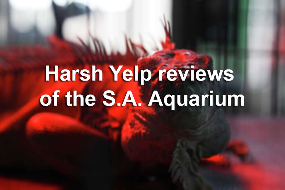 The San Antonio Aquarium has been open for 6 months and has an overall rating of 1.5 stars on Yelp. 45 of the 68 reviews on the business review site give it only one star. See what people are saying about the Alamo City's newest aquarium. Photo: Tyler White, SAEN / San Antonio Express-News