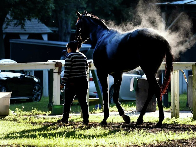 A horse steams from cool breezes this morning Thursday July 23, 2015 at the Saratoga Race Course in Saratoga Springs, N.Y.  Friday is opening day for the meeting will will have 40 days of racing over six weeks.    (Skip Dickstein/Times Union) Photo: SKIP DICKSTEIN / 00032589A