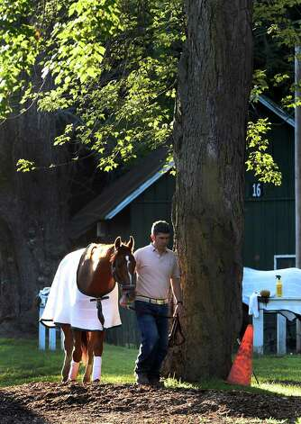 A horse is cooled under the trees in the backstretch after morning exercise Thursday July 23, 2015 at the Saratoga Race Course in Saratoga Springs, N.Y.  Friday is opening day for the meeting will will have 40 days of racing over six weeks.    (Skip Dickstein/Times Union) Photo: SKIP DICKSTEIN / 00032589A