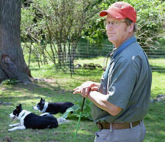 Eric Johnson and his border collies Thursday July 16, 2015, at his Johnson Family Farm, a stop on the Outdoor Museum tour in New Lebanon, NY.  (John Carl D'Annibale / Times Union) Photo: John Carl D'Annibale / 00032639A
