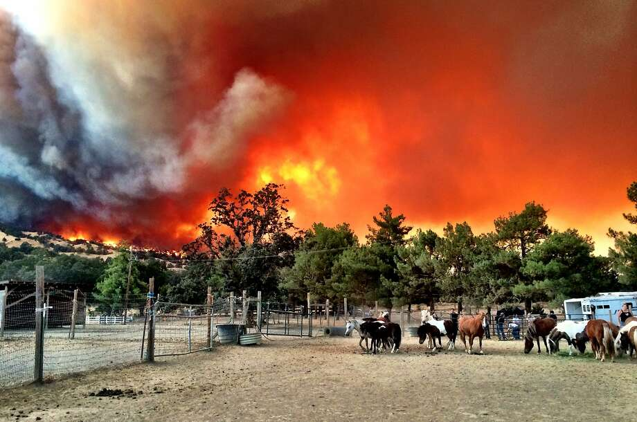 Upon arrival at the Windgate Ranch near Pleasants Valley Road in Vacaville Wednesday Kelly Campbell called friends who helped her move 75 horses to other ranches farther away from the wildfire on July 22, 2015. Photo: Kelly Campbell