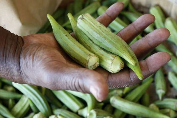 A customer checks the firmness of fresh okra at Doris Berry Produce stand in Jackson, Miss., Wednesday, July 15, 2015. A recent survey indicates Mississippi adults are last in eating vegetables but they are not alone. Most U.S. adults still aren't eating nearly enough fruits and vegetables with only 13 percent saying they eat the required amount of fruit each day and only 9 percent eating enough vegetables. (AP Photo/Rogelio V. Solis)