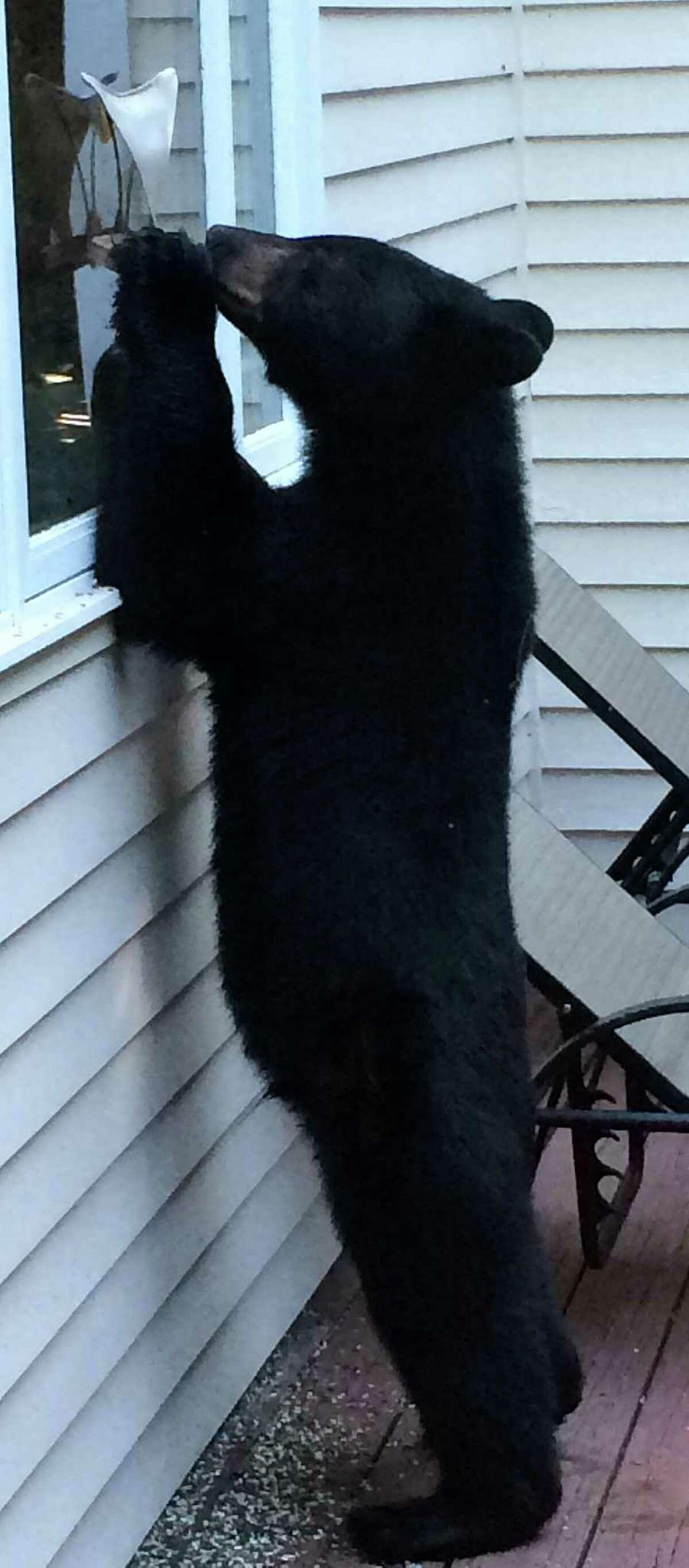 Bethel 14 bear sightings (5/31/17-5/21/18)