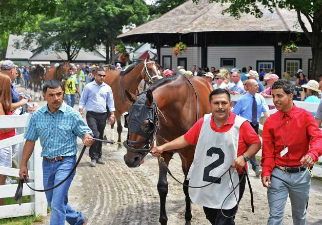 Horses are brought into in the Paddock for the first race  at Saratoga Race Course Friday July 24, 2015 in Saratoga Springs, NY.  (John Carl D'Annibale / Times Union) Photo: John Carl D'Annibale / 00032586B