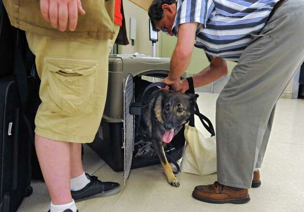 Tim Sheard of Oregon, right, lets Freya the dog out of his carrier after he and his son Caleb Sheard, left, arrive at the Albany International Airport on Thursday, July 24, 2015 in Albany, N.Y. The father, son and dog were traveling to a summer place in upstate New York. (Lori Van Buren / Times Union) Photo: Lori Van Buren / 00032748A