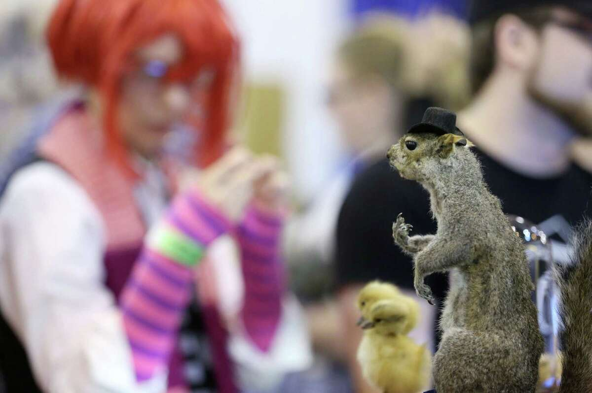 """A taxidermied squirrel is seen for sale at the Space City Comic Con at NRG Center Sunday, July 26, 2015, in Houston. The item features a squirrel with its middle finger raised, and is called """"Squirrelitude."""""""