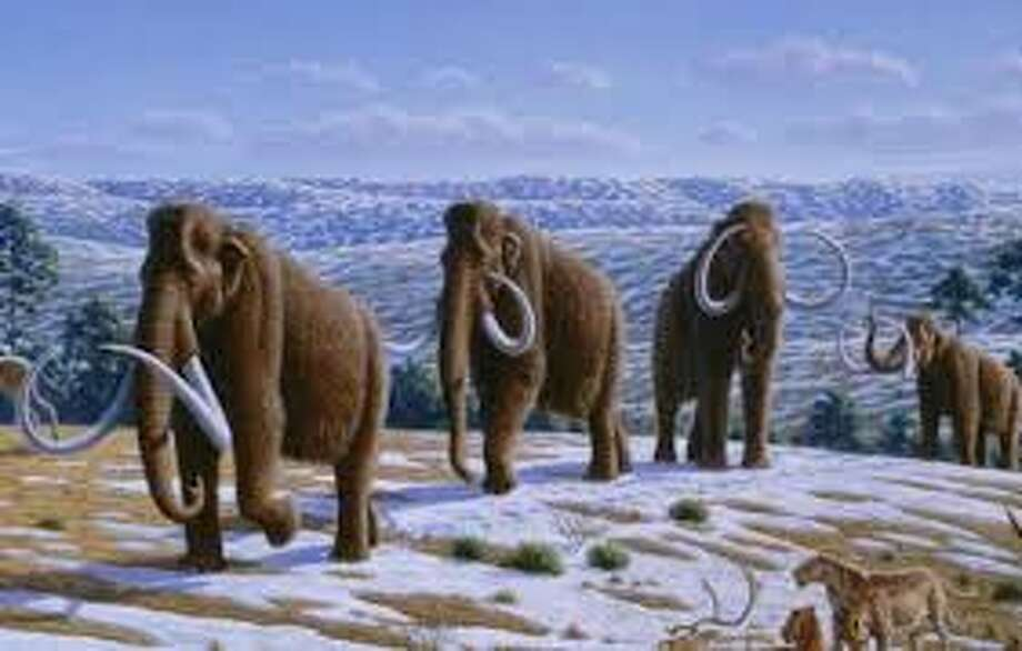 11 Facts About Mammoths:Imagine thatOf all the prehistoric mammals, none has captured the imagination like the mammoth.