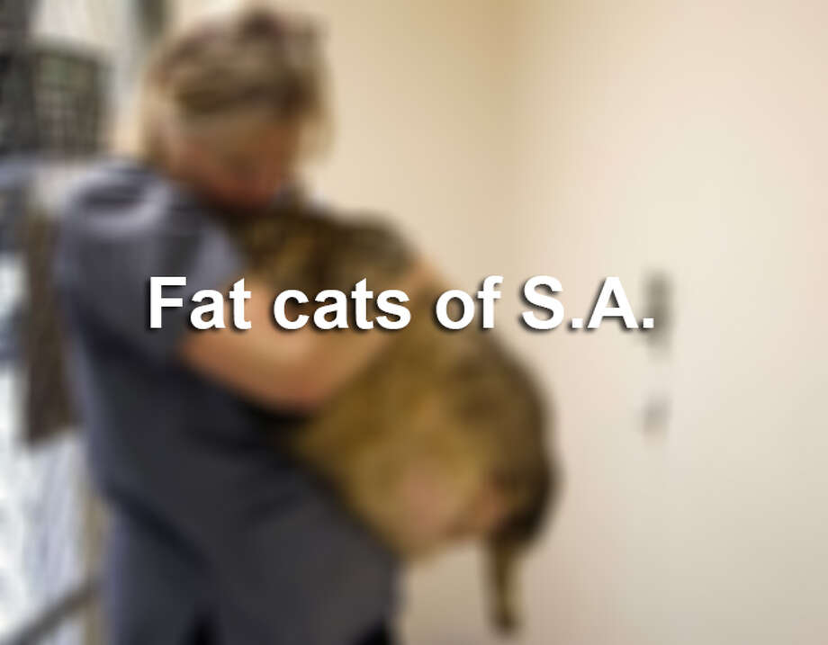 Animal Care Services sometimes deals with overweight pets that cannot be adopted.