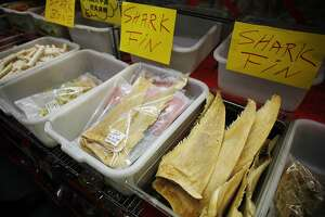U.S. court upholds California ban on shark fins - Photo