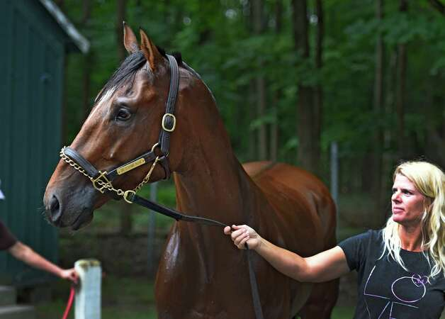 Assistant trainer Julie Clark holds Texas Red after being washed after his morning exercise at the Saratoga Race Course Monday morning July 27, 2015 in Saratoga Springs, N.Y.    (Skip Dickstein/Times Union) Photo: SKIP DICKSTEIN