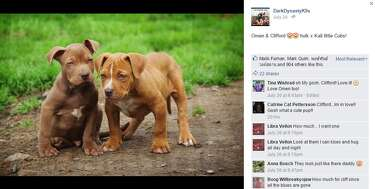 World's biggest pit bull fathers adorable puppies worth up