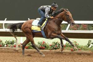 Next up for American Pharoah: Haskell Invitational - Photo