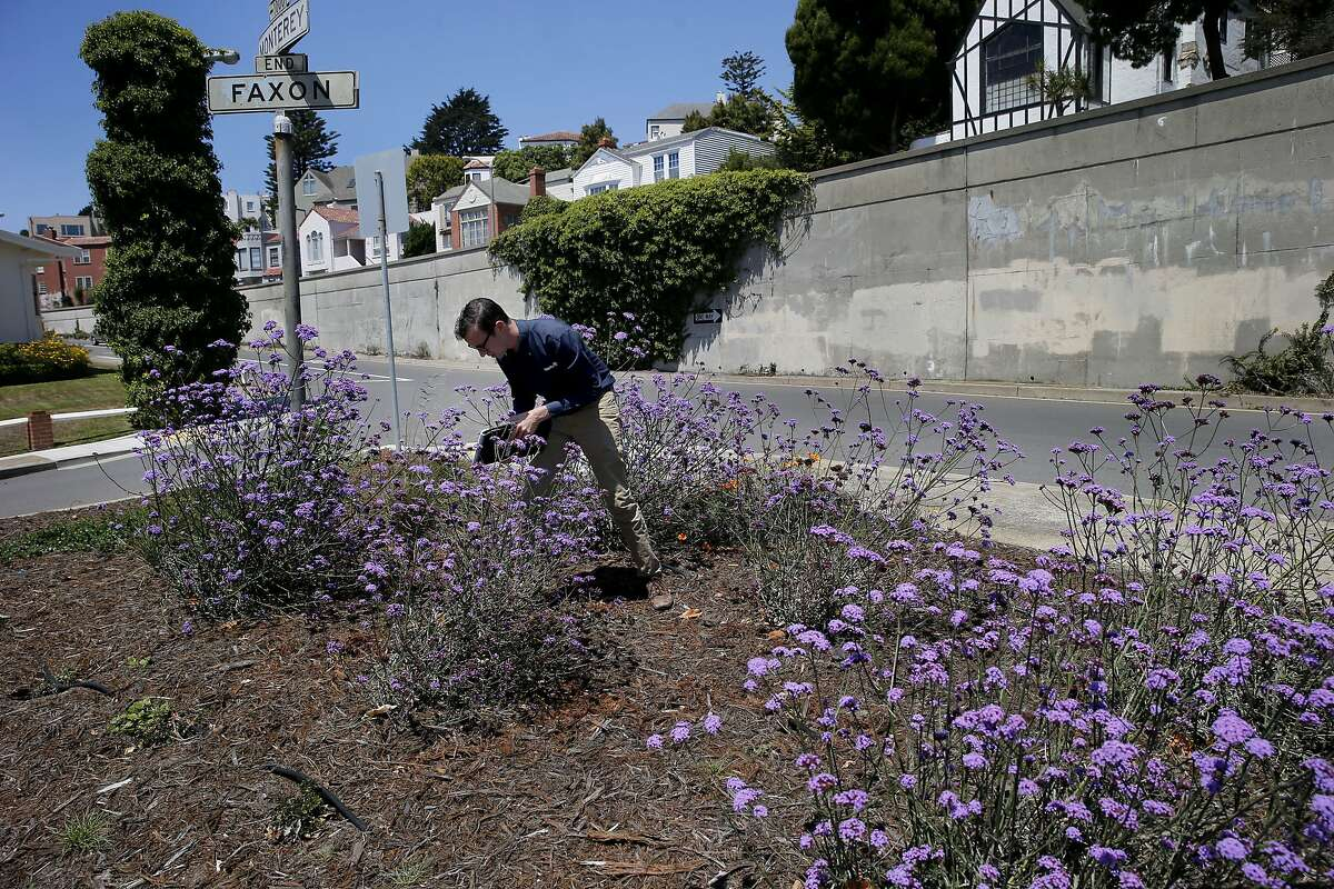 Arborist Nicholas Crawford with Davey Tree Company inspects the drip system which now feeds the street median at Monterey and Faxon Tuesday July 28, 2015. Two watering methods are detailed for irrigating trees and shrubs in a neighborhood in San Francisco, Calif.