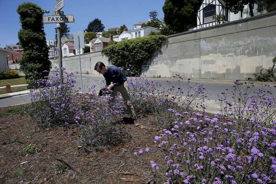 Nicholas Crawford, master arborist with Davey Tree Expert Co., checks a drip watering system in S.F. that he recommends for mature trees. Photo: Brant Ward, The Chronicle